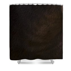 Wild Mustangs Of New Mexico 42 Shower Curtain