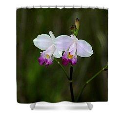 Wild Orchid Shower Curtain by Pamela Walton