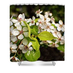 Wild Plum Blossoms Shower Curtain