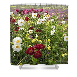 Wild Poppies South Texas Shower Curtain by Susan Rovira