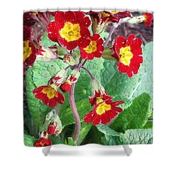 Wild Primroses Shower Curtain