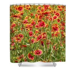 Shower Curtain featuring the photograph Wild Red Daisies #1 by Robert ONeil