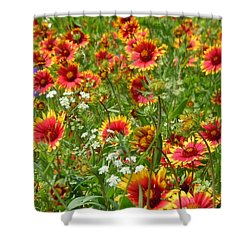Shower Curtain featuring the photograph Wild Red Daisies #2 by Robert ONeil