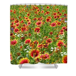 Shower Curtain featuring the photograph Wild Red Daisies #3 by Robert ONeil