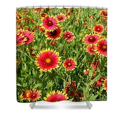 Shower Curtain featuring the photograph Wild Red Daisies #4 by Robert ONeil