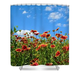 Shower Curtain featuring the photograph Wild Red Daisies #5 by Robert ONeil