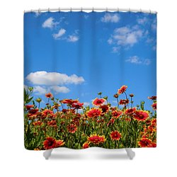 Shower Curtain featuring the photograph Wild Red Daisies #6 by Robert ONeil