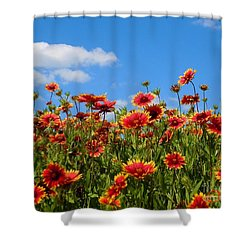 Shower Curtain featuring the photograph Wild Red Daisies #7 by Robert ONeil
