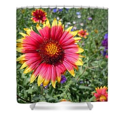 Shower Curtain featuring the photograph Wild Red Daisy #1 by Robert ONeil