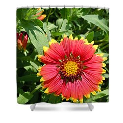 Shower Curtain featuring the photograph Wild Red Daisy #2 by Robert ONeil