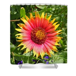 Shower Curtain featuring the photograph Wild Red Daisy #3 by Robert ONeil