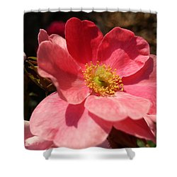 Shower Curtain featuring the photograph Wild Rose by Caryl J Bohn