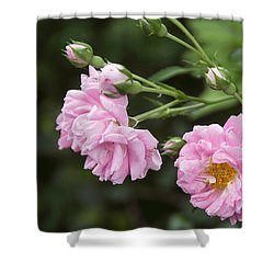 Wild Roses Matte Finish Shower Curtain