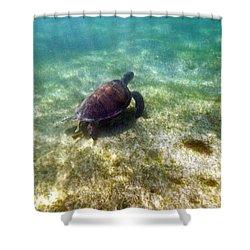 Shower Curtain featuring the photograph Wild Sea Turtle Underwater by Eti Reid
