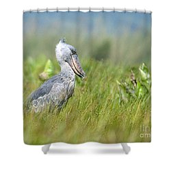 Shower Curtain featuring the photograph Wild Shoebill Balaeniceps Rex  by Liz Leyden