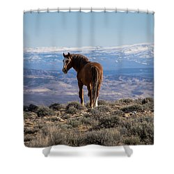 Wild Stallion Of Sand Wash Basin Shower Curtain