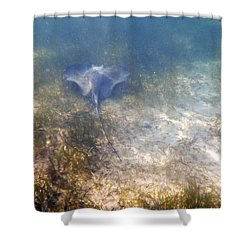 Shower Curtain featuring the photograph Wild Sting Ray by Eti Reid
