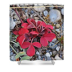 Shower Curtain featuring the photograph Wild Strawberry by Ann E Robson