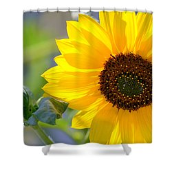Shower Curtain featuring the photograph Wild Sunflower by Nadalyn Larsen
