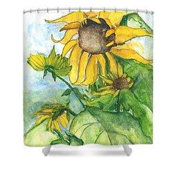 Wild Sunflowers Shower Curtain by Sherry Harradence