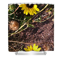 Shower Curtain featuring the photograph Wild Sunflowers by Fortunate Findings Shirley Dickerson