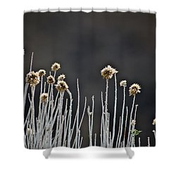 Wild Things 1 Shower Curtain