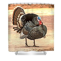 Wild Tom Turkey Shower Curtain by Robert Bales