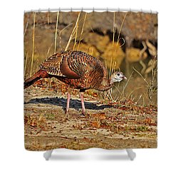 Wild Turkey Shower Curtain by Al Powell Photography USA