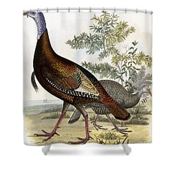 Wild Turkey Shower Curtain by Titian Ramsey Peale