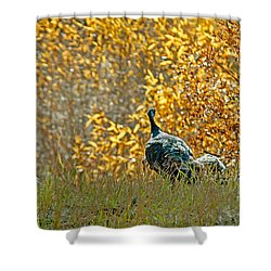 Wild Turkeys And Fall Colors Shower Curtain by Robert Bales