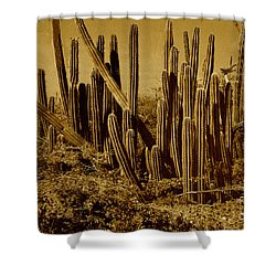 Wild West Ivb Shower Curtain by Anita Lewis