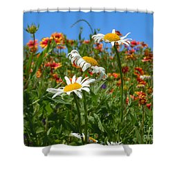 Shower Curtain featuring the photograph Wild White Daisies #1 by Robert ONeil