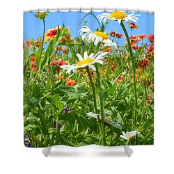 Shower Curtain featuring the photograph Wild White Daisies #2 by Robert ONeil