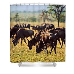 Wildebeests Herd. Gnu On African Savanna Shower Curtain by Michal Bednarek