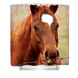 Wildfire - Equine Portrait Shower Curtain