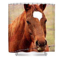 Wildfire - Equine Portrait Shower Curtain by Deena Stoddard