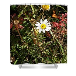 Wildflower @ Kit Carson Shower Curtain