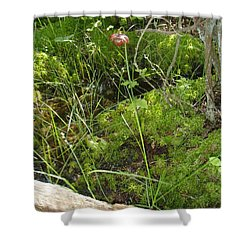Shower Curtain featuring the photograph Wildflower 1 by Robert Nickologianis