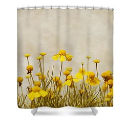 Wildflower Daisies Shower Curtain by Kim Hojnacki