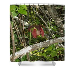 Shower Curtain featuring the photograph Wildflower by Robert Nickologianis