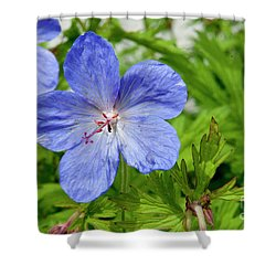 Shower Curtain featuring the photograph Wildflower by Rod Wiens