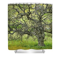 Wildflowers Under Oak Tree - Spring In Central California Shower Curtain