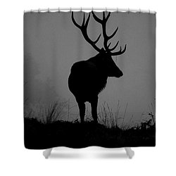 Wildlife Monarch Of The Park Shower Curtain