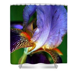 Wildly Colorful Shower Curtain
