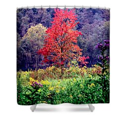 Wildwood Flowers Shower Curtain by Karen Wiles