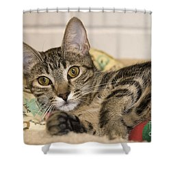 Wilkie Shower Curtain