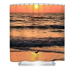 Willet In The Spotlight Shower Curtain by Adam Jewell