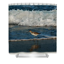 Shower Curtain featuring the photograph Willet Shore Bird by James C Thomas