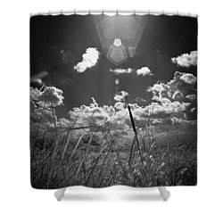 Willow Shower Curtain by Bradley R Youngberg