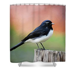 Willy Wagtail Austalian Bird Painting Shower Curtain